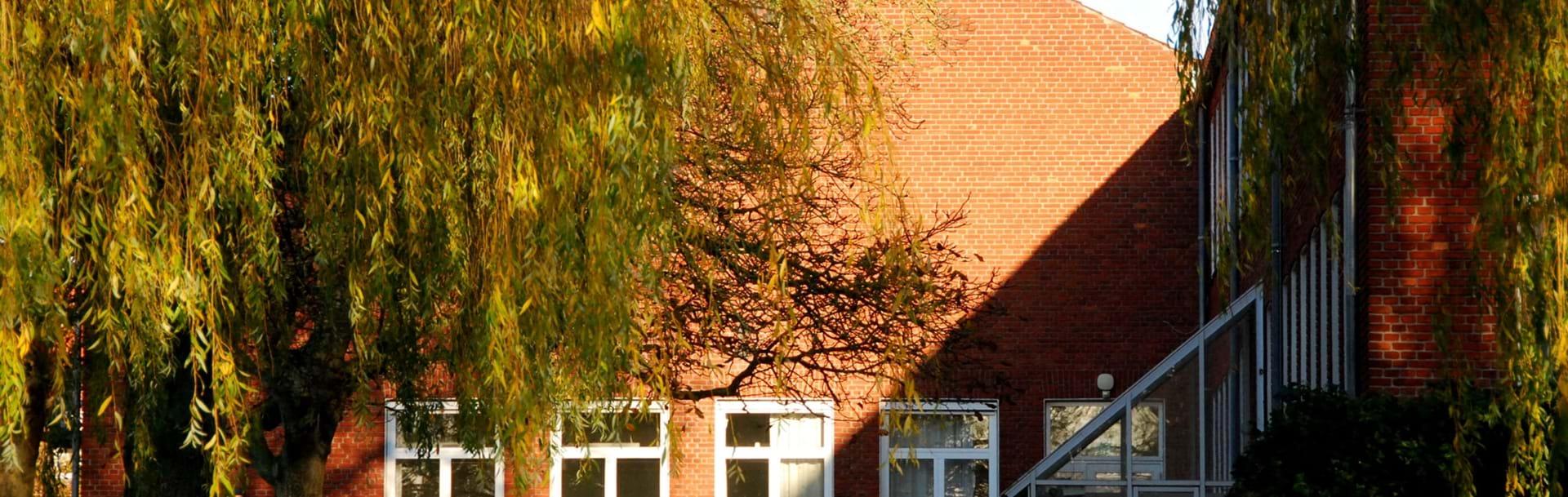 En af skolens bygninger i baggrunden med et stort træ foran