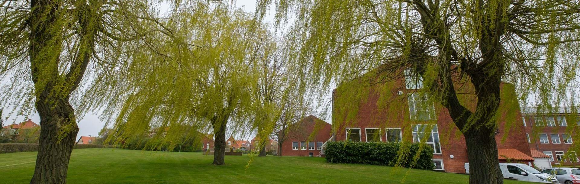 Nykøbing Katedralskole set fra parken med store træer i forgrunden