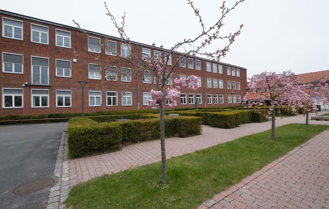Katedralskolens bygninger set udefra med blomstrende træer i forgrunden